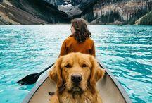 Dogventures // Kutyás kalandok