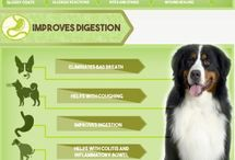 Dog Health and Nutrition