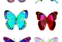 Fliegende Schönheiten