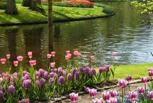 paesaggi floreali