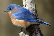 Bird Luv