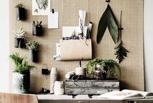SUCCULENTS-AIR PLANTS