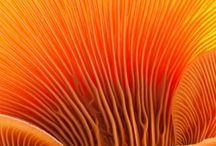 fungas/ mashrooms
