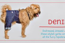 Casual Wear / For the loungy dog that loves being on trend
