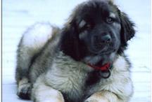 I dream of Puppies.
