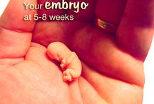 Little Bitty Babies / Embryos and development