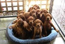 Puppies---Štěnata
