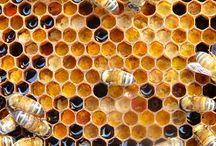 Bee ~ #