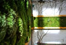 Greening Urban Areas