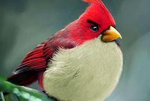 Nature Birds/Blooms
