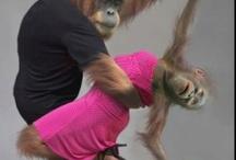 Monkey See Monkey Do / by Mysmallwardrobe.com