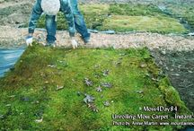 MossLawn / Creating year-round green lawns with eco-friendly mosses instead of grass.