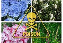 Poisonous  plants animaĺ & human