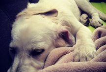Dog Marilyn