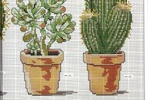 kaktus vysivka