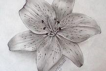 tiger lily &poinsettia