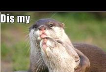 Otter Laugh