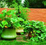 gardening / by Dorothy Maffei