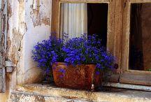 Si no tienes balcón, ventanas y flores | Windows and flowers