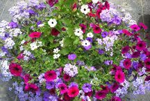 Call's Country Nursery Favorites / a collection of hanging baskets, planters, & product grown right here at Call's Country Nursery!