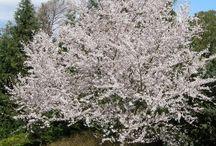 Garden - Trees