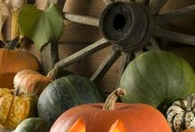 Fall Curb Appeal / A collection of Fall décor for your front porch or patio.