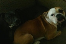 We're All Mad Here!  / Day in the Life of Cookie Monster, Tootsie Roll, and Paisley, my dogs!