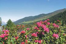 walking, mountainbiken / wandern, mountainbiken in Tirol Österreich