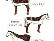 heste greier