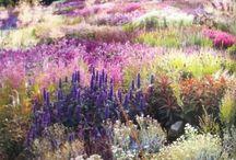 Piet Oudolf / Garden inspiration