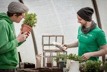Saatgut: Kräuter und Gemüse / Alles rund um Kräuter und Gemüse Saatgut findest du hier: Unsere Saatgeschwister stehen für bestes Saatgut, schönes Design und nachhaltige Verpackungen. Mit den ausführlichen Pflanzanleitungen richten sich die Produkte auch an Nicht-Gärtner. Sie sind das ideale Geschenk, um jedermann zu motivieren selber im Garten, auf dem Balkon oder der Fensterbank tätig zu werden!