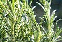 plantas medicinais  para  cultivar  em casa.