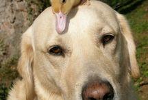 Vrienschap / Vrienschap
