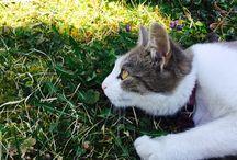 Bodza Cica  ◕‿◕ my cat