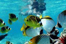 Deep sea beauties