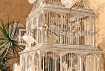 In love with Cages