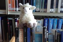 Marty the Library Sheep / Marty likes to help us out in the library from time to time.
