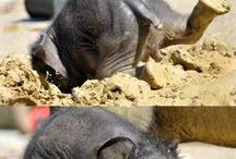 Turma de ...elefanti