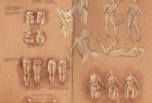 Anatomy - Torso / Drawing anatomy