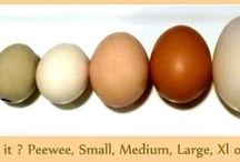 Chickens & Eggs