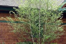 stromy a zeleň