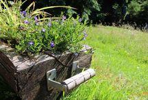 Zahrada v nádobě /// Container garden