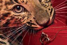 Belleza y animales