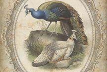 3M - ptaki