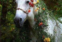 cheval herbe