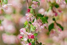 Весна-красна....