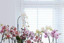 ORCHIDS / orchids, plants, flowers, Orchideen,
