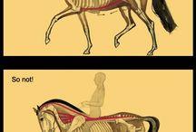 Heste / Inspiration til min ridning, og billeder der viser BD´s udvikling.