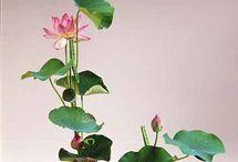 IKEBANA - Flowers