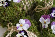 bloemen/planten / Bloemen / Planten